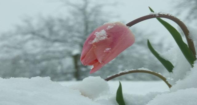 kar çiçek